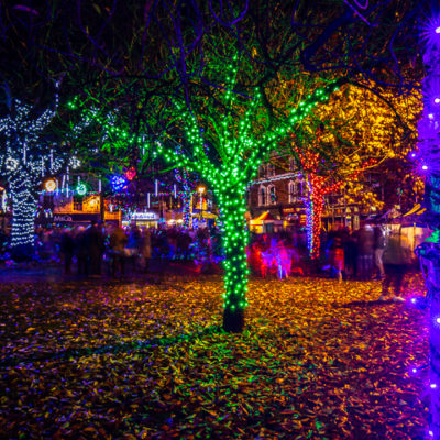 Christmas Lights On Trees In Nantwich