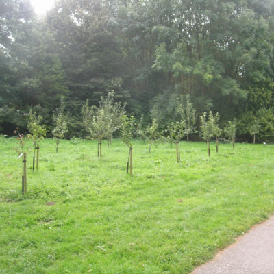 Nantwich Orchard