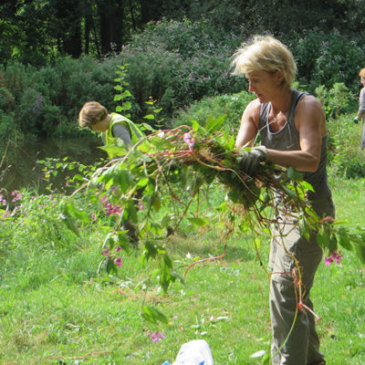 Partnership Volunteers Removing Balsam - Click to open full size image