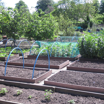 Allotment Site In Nantwich - Click to open full size image