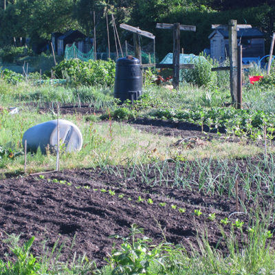 Allotments In Nantwich - Click to open full size image