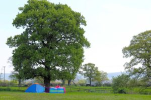 Manor Farm Camping