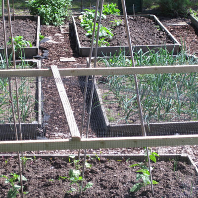 Raised Beds At Allotments
