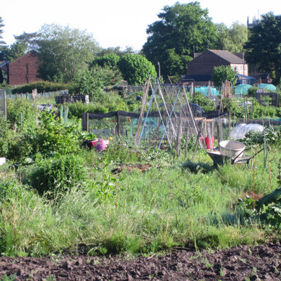 View Across Nantwich Allotment