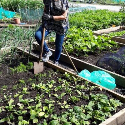 Nantwich In Bloom Member Working At The Allotment
