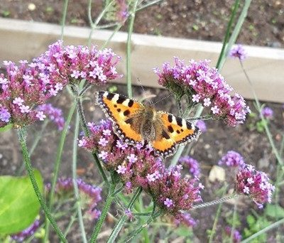 Butterfly On Flowers - Click to open full size image