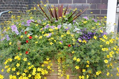 Colourful Planter At Nantwich Railway - Click to open full size image