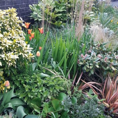 Plants In Full Bloom At Nantwich Station - Click to open full size image