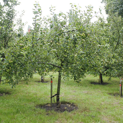 Community Orchard Mid Summer 2020 - Click to open full size image
